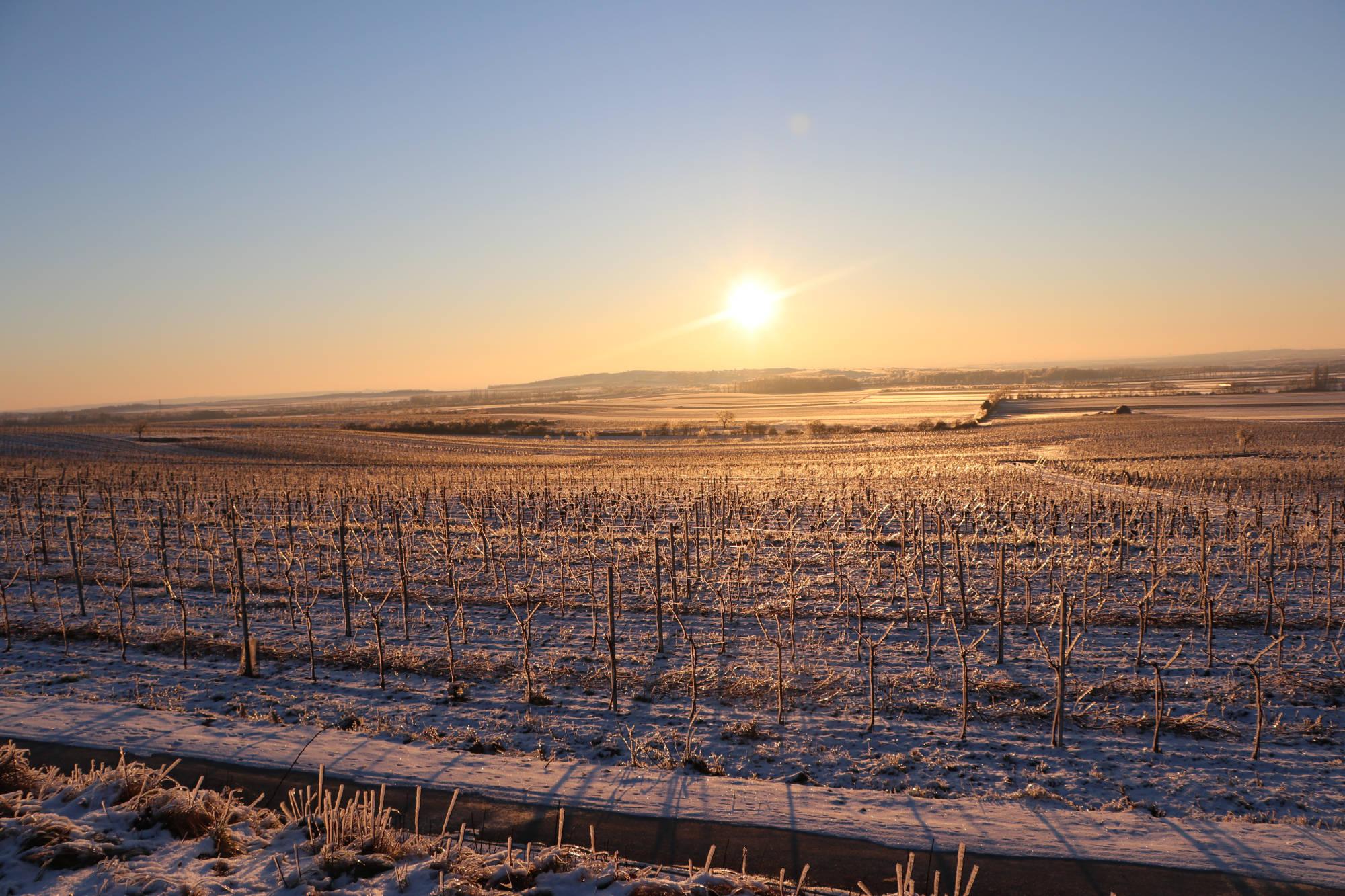 Weingut Schrejma Weinviertel Böden